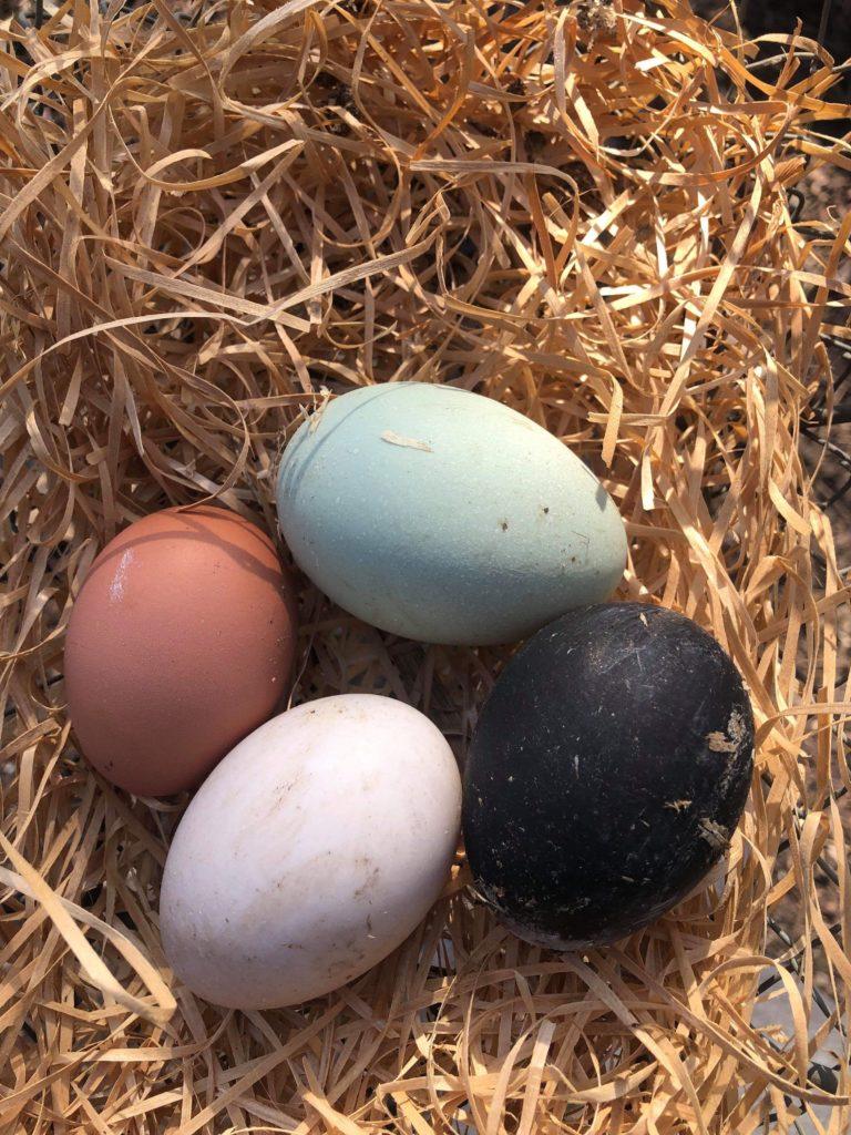 Svart egg
